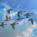M.R.Ducks - Sold